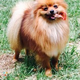Dog Walker, Pet Sitter in Fayetteville