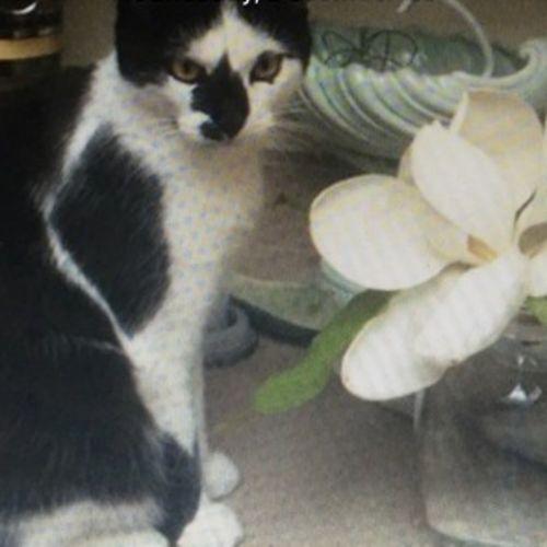 Pet Care Job 's Profile Picture