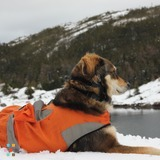 Dog Walker Job in Petty Harbour-Maddox Cove