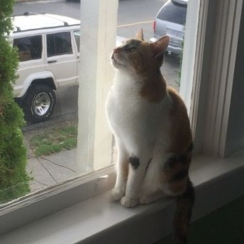 Pet Care Job Sarah S's Profile Picture