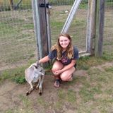 I'm am an animal lover looking to care for pets