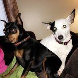 Dog Walker, Pet Sitter in Crafton