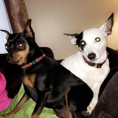Pet Care Provider Christine L's Profile Picture