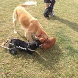 Dog Walker in Winnipeg