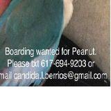 Lovebird Sitter - contact me directly