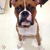 Dog Walker, Pet Sitter in Shreveport