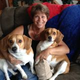 Available: Talented Pet Trainer in Zephyrhills, Florida