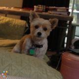 Dog Walker Job, Pet Sitter Job in New York City