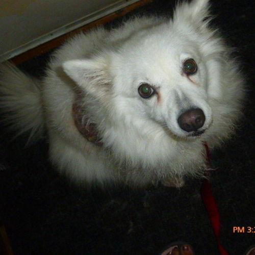 Pet Care Job Anne Jamieson's Profile Picture