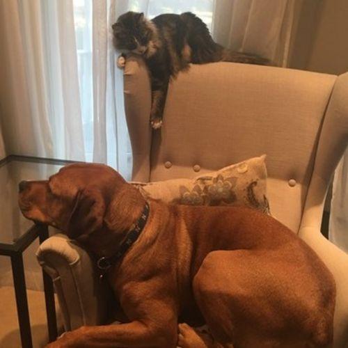 Pet Care Job Jeanine B's Profile Picture