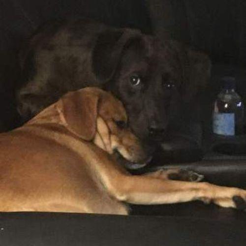 Pet Care Provider Brenda D Gallery Image 2