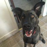 Dog Walker in Washington
