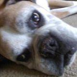 Dog Walker, Pet Sitter in Monterey