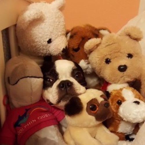 Pet Care Job D C's Profile Picture