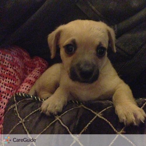 Pet Care Provider Brianna 's Profile Picture