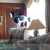 Pet Sitter in Whitesboro