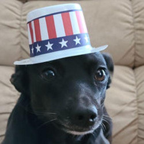 Pet Care Provider Barbara O's Profile Picture